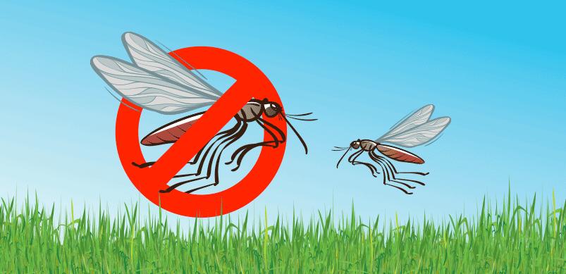 Mosquitos Flying In Garden Cómo eliminar mosquitos y otras plagas