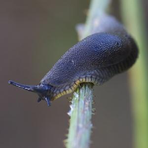 Slug Wrapped Around Stem 300x300 Cómo eliminar mosquitos y otras plagas