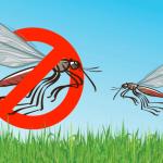 Elminar mosquitos